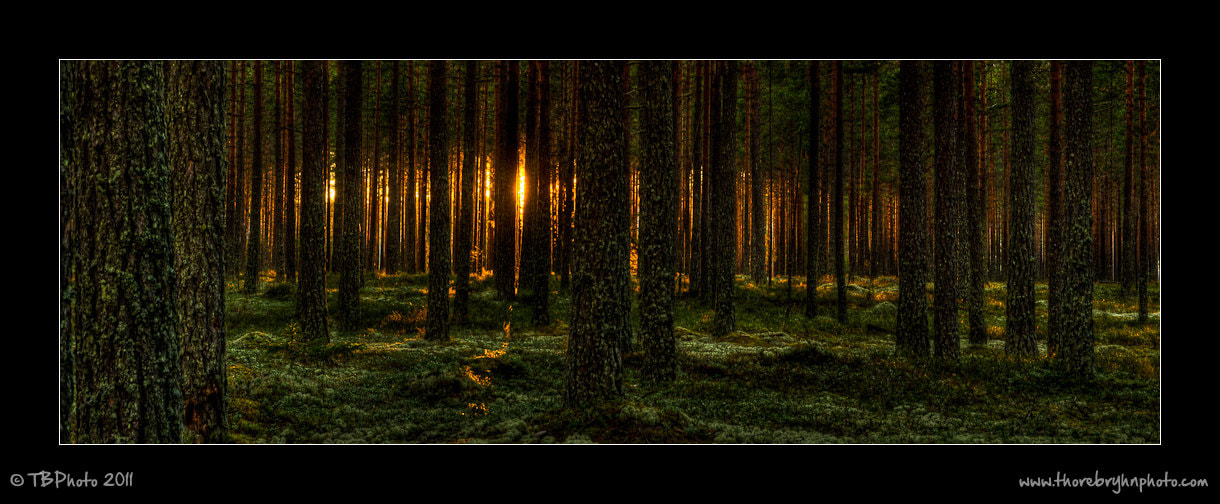 Photograph Follow the light by Thore Bryhn on 500px