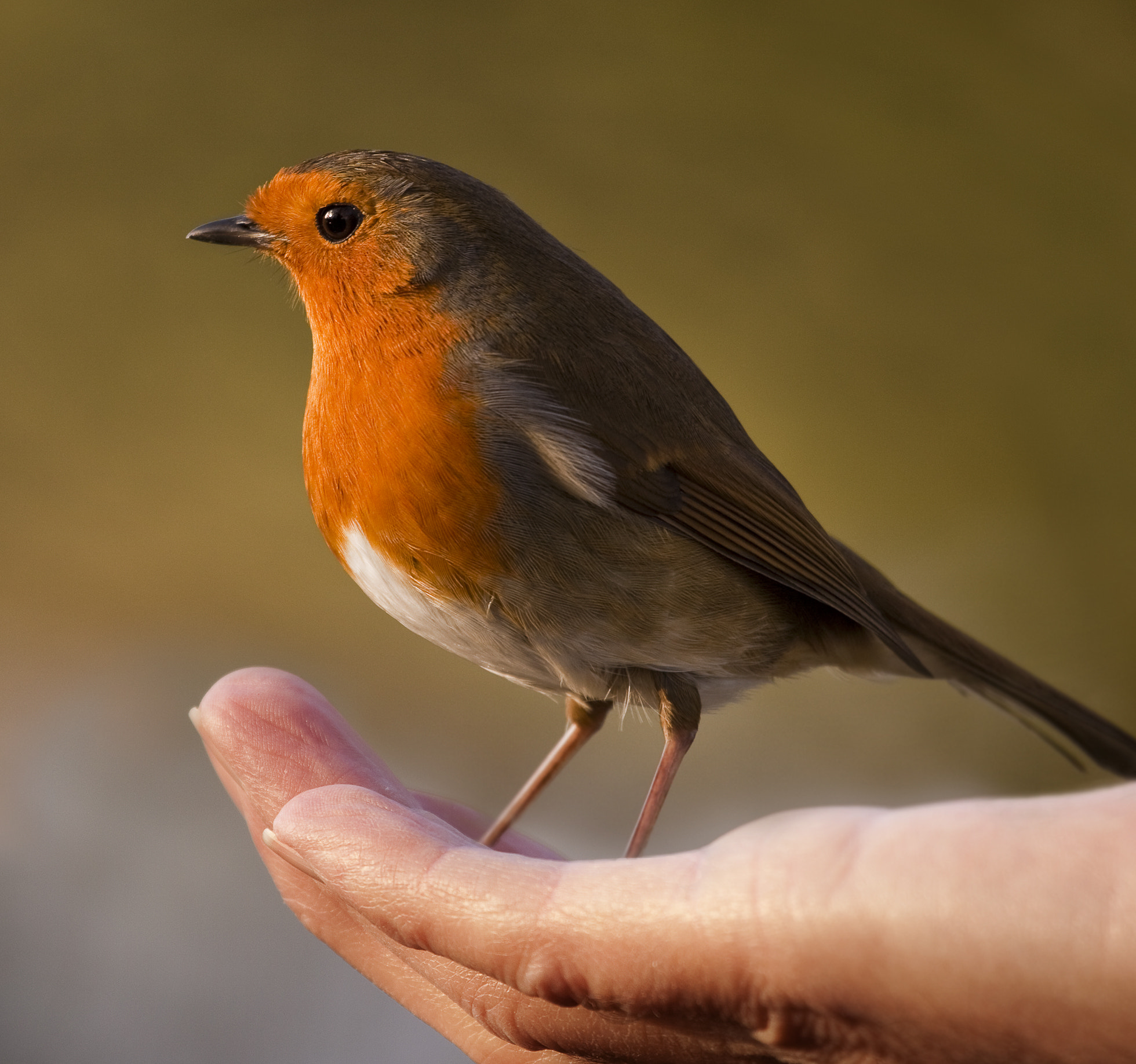 Photograph Bird in the hand by Mark Tizard on 500px