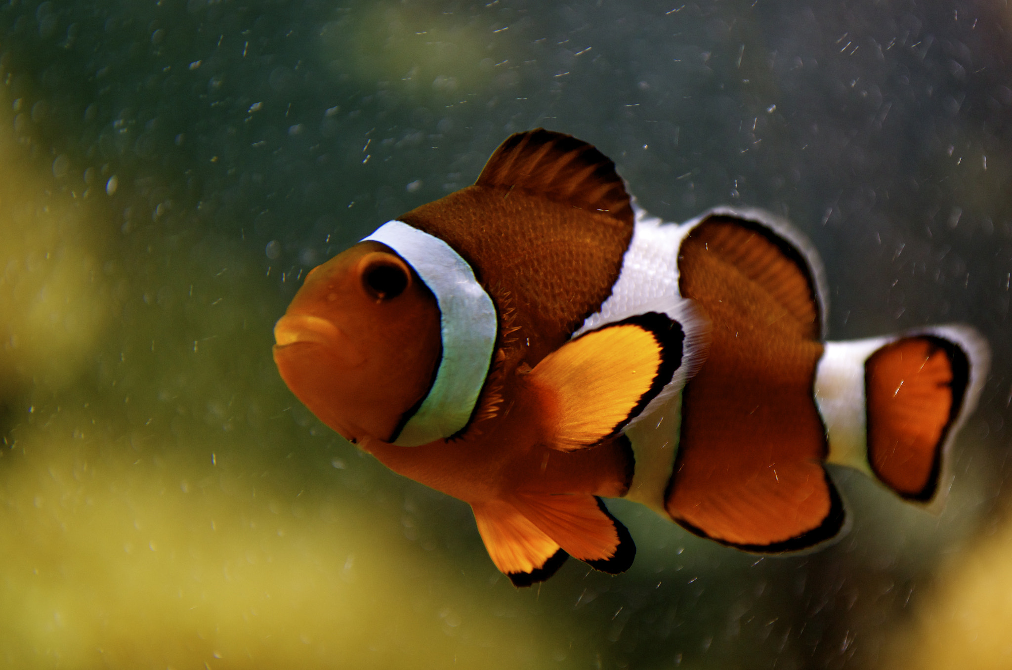 Photograph Found Nemo by Andreas Ehrmaier on 500px
