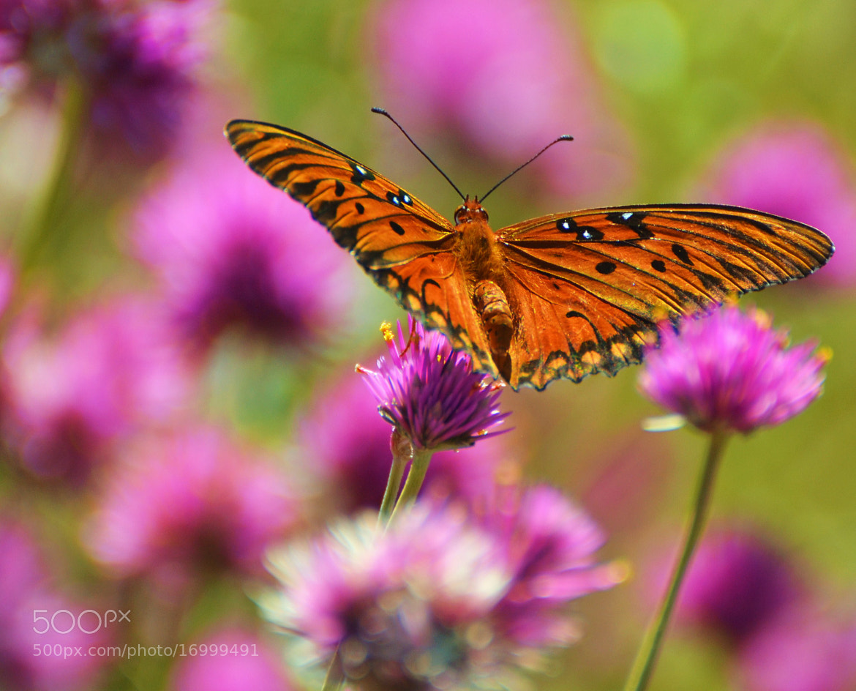 Photograph Purple/Orange by Michael Fitzsimmons on 500px