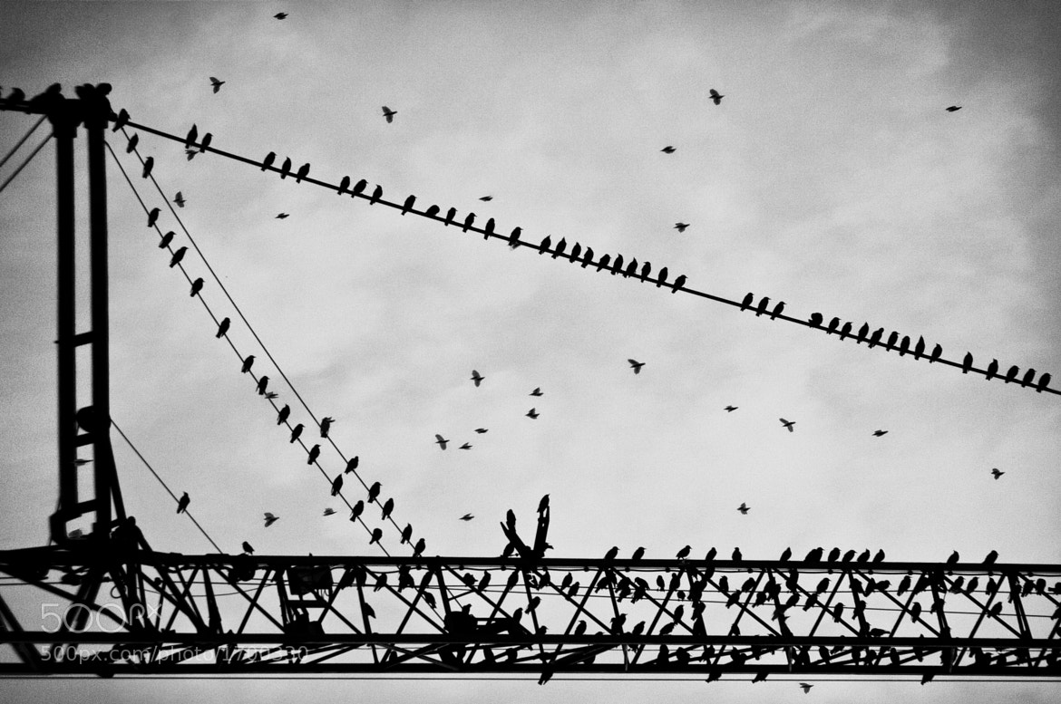 Photograph Birds and Big Machines by Crazy Ivory on 500px