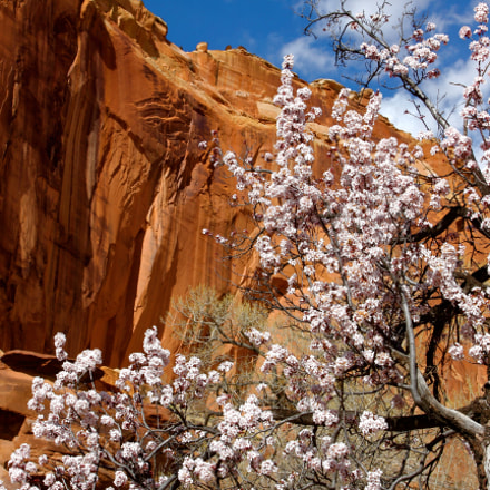 Blossoms and Redrock, Canon EOS 60D, Canon EF 17-40mm f/4L USM