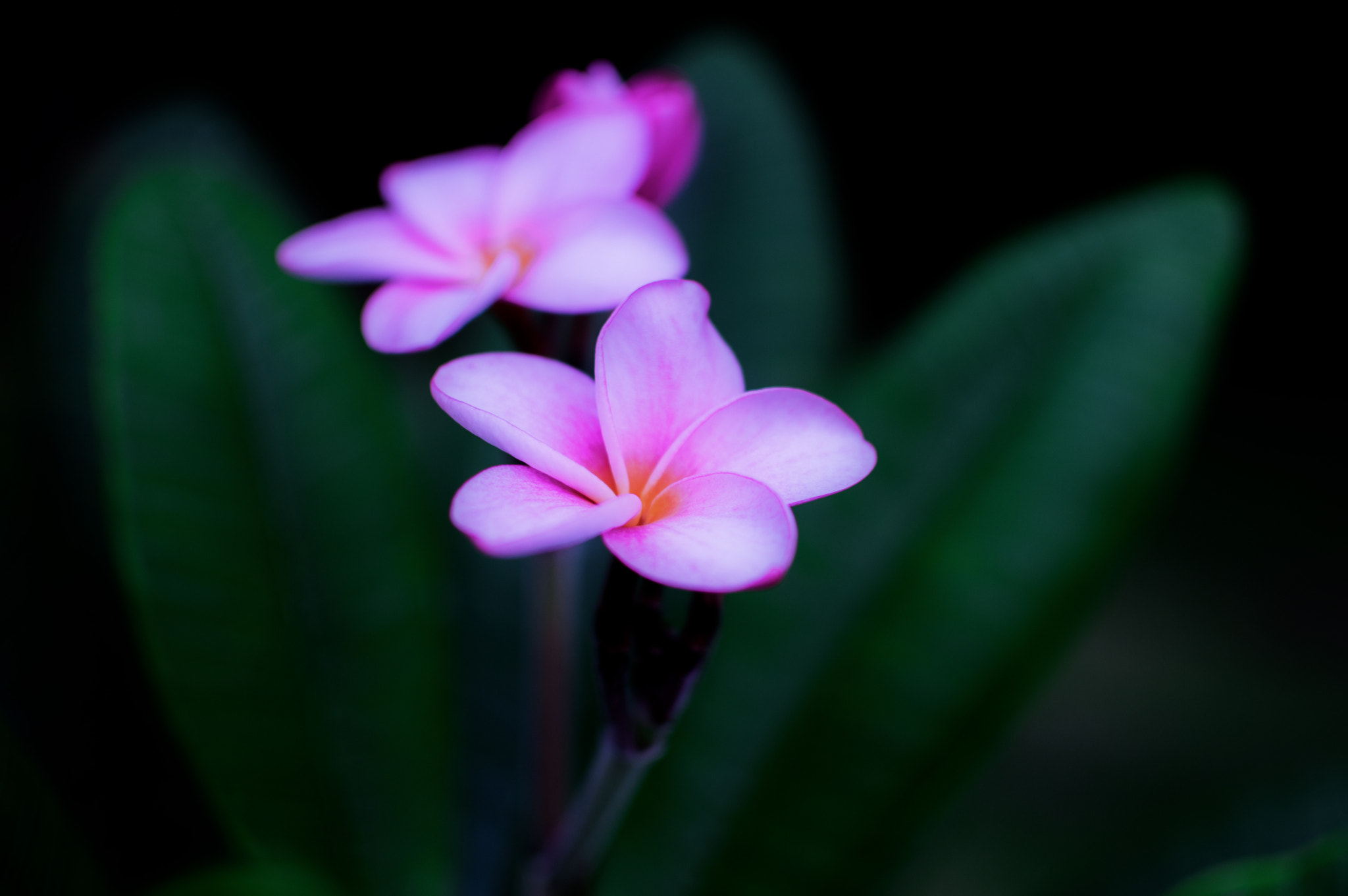 Photograph Flower by Cosmo Tee on 500px