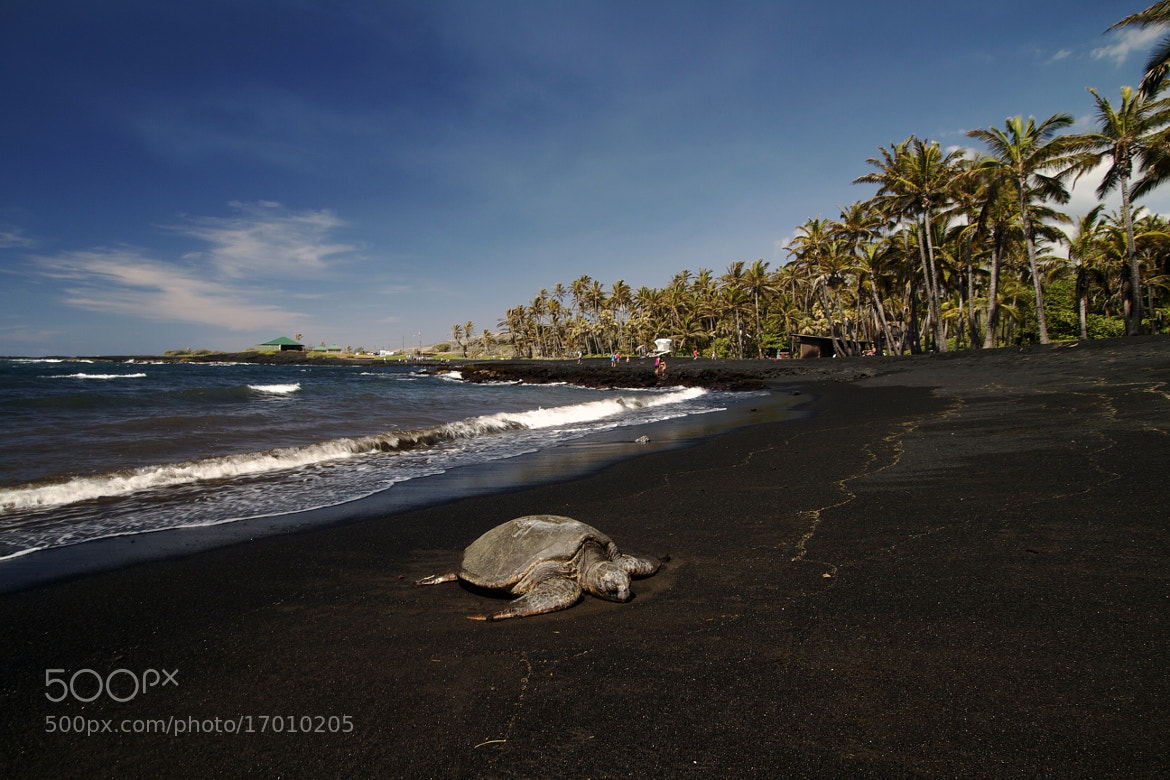 Photograph If I Could Swim With Turtles  by Paul Garrett on 500px