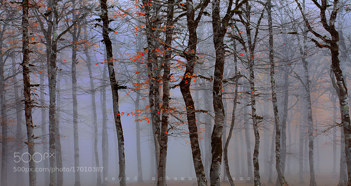 Photograph AUTUMN MIST by Seyed Mohammad  Shamsi on 500px