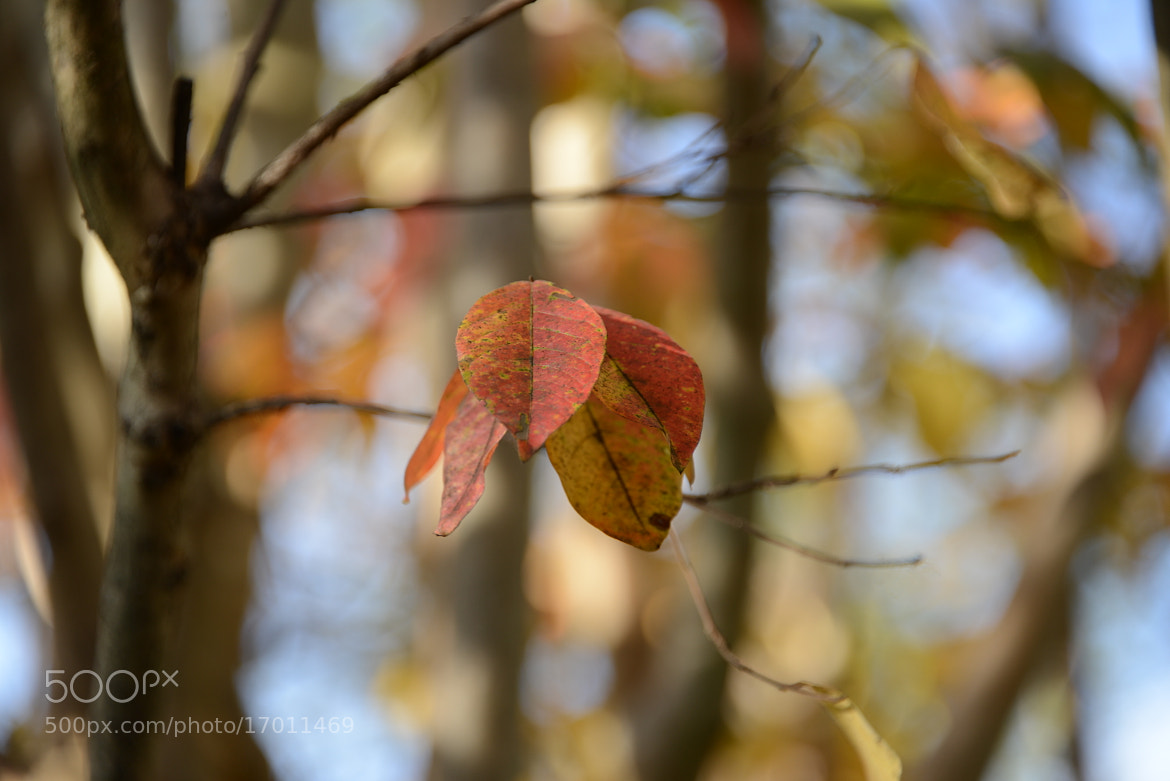 Photograph The Autumn Leaves 5 by Mark Luftig on 500px