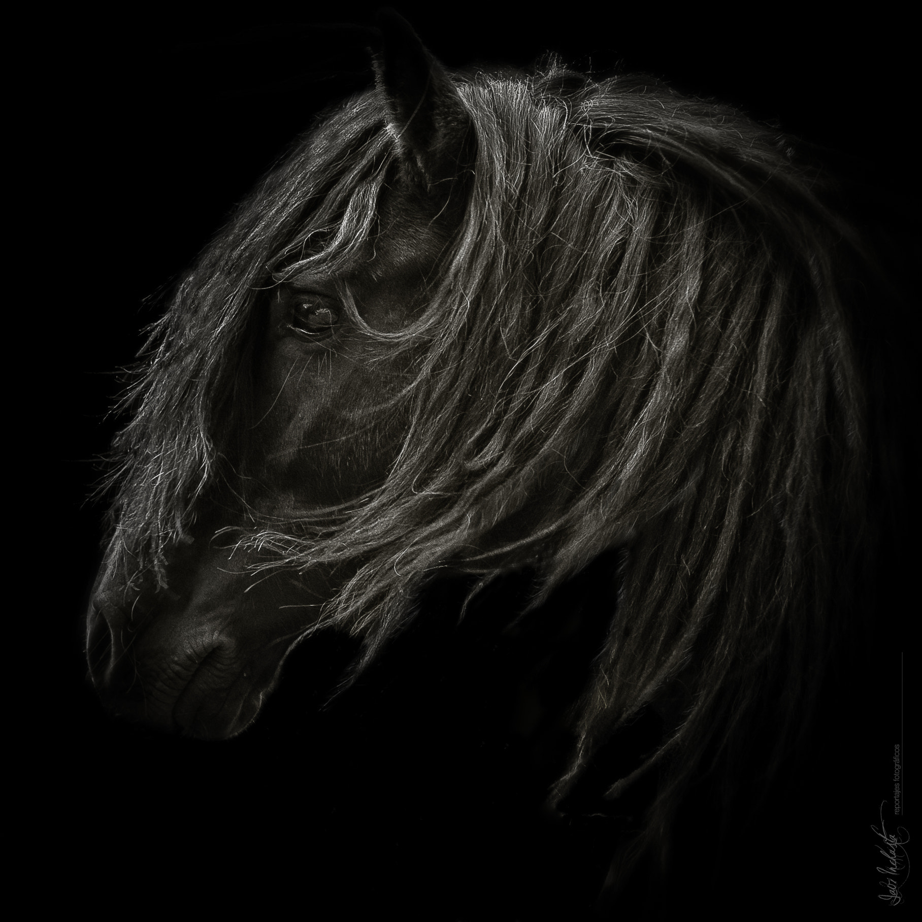Photograph Horse by Javi Inchusta on 500px