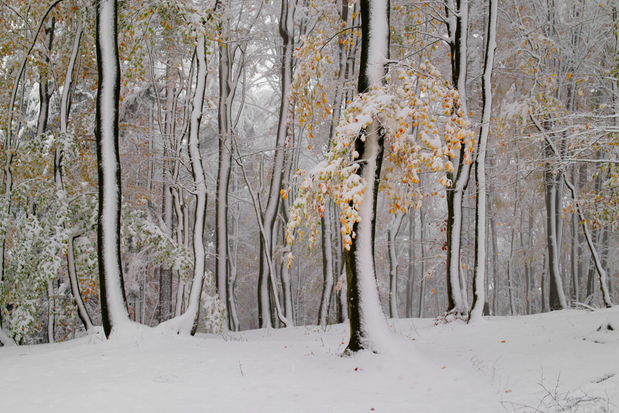 Photograph First snow by Janez Tolar on 500px