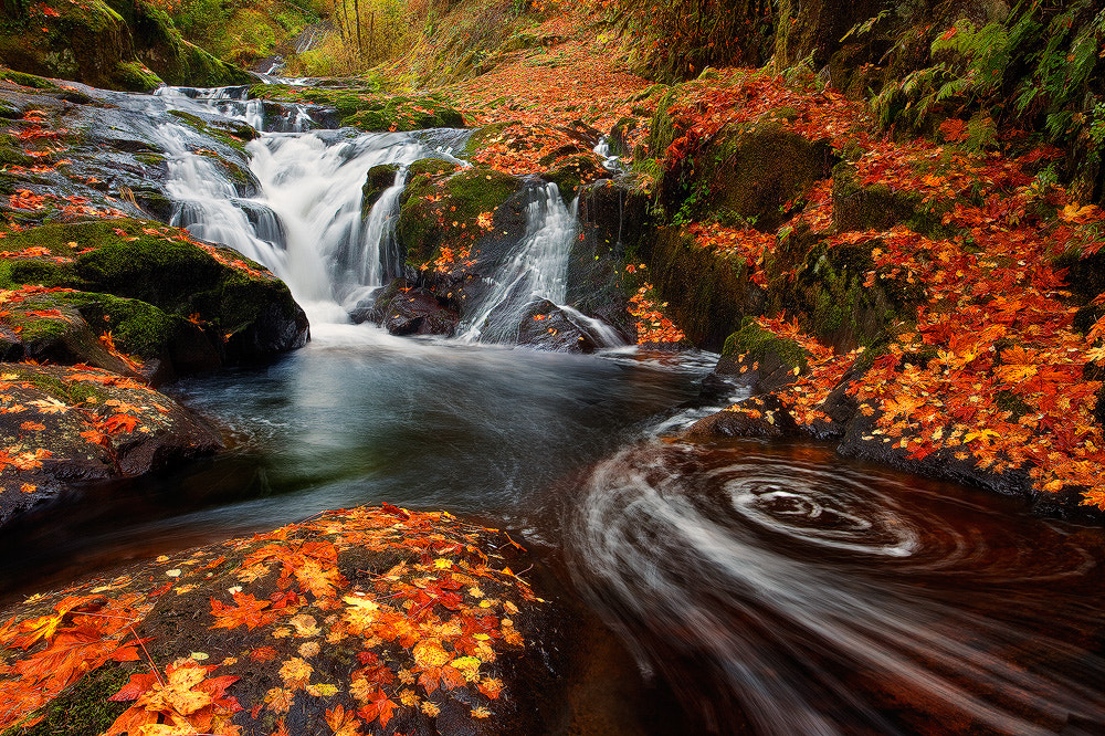 Photograph The Color Carpet by Miles Morgan on 500px