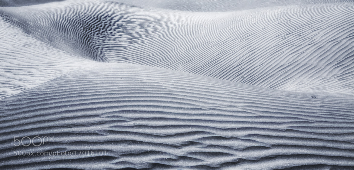 Photograph Silver Sandscape by Jassi Oberai on 500px