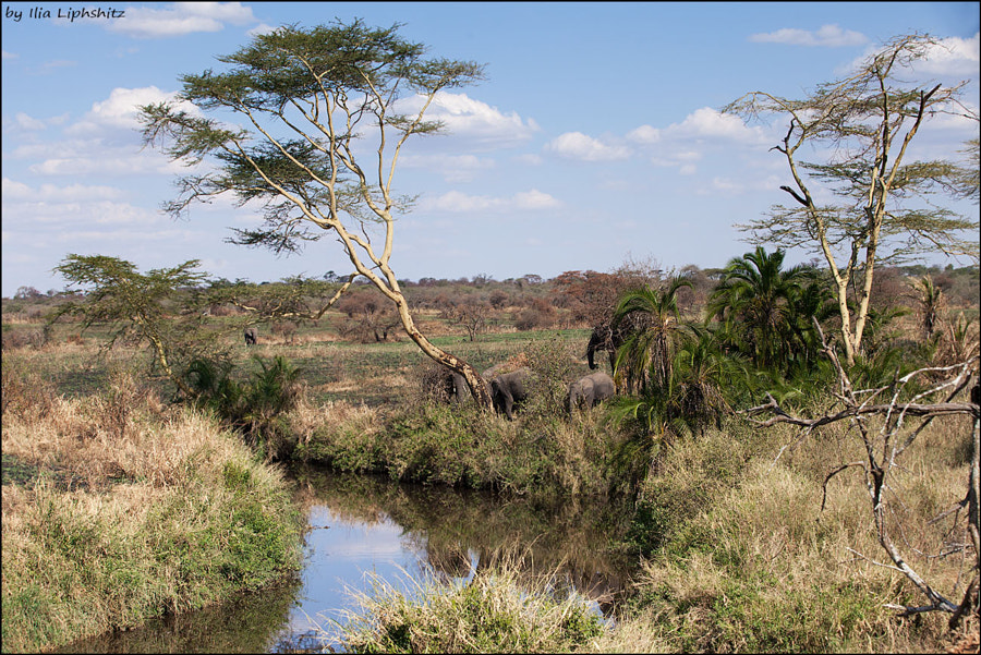 Landscape with elephants - Landscapes of Serengeti №2
