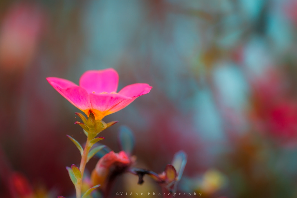 Photograph Dreams by Vidhu S on 500px