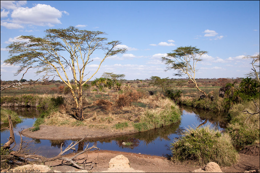 Landscapes of Serengeti №3