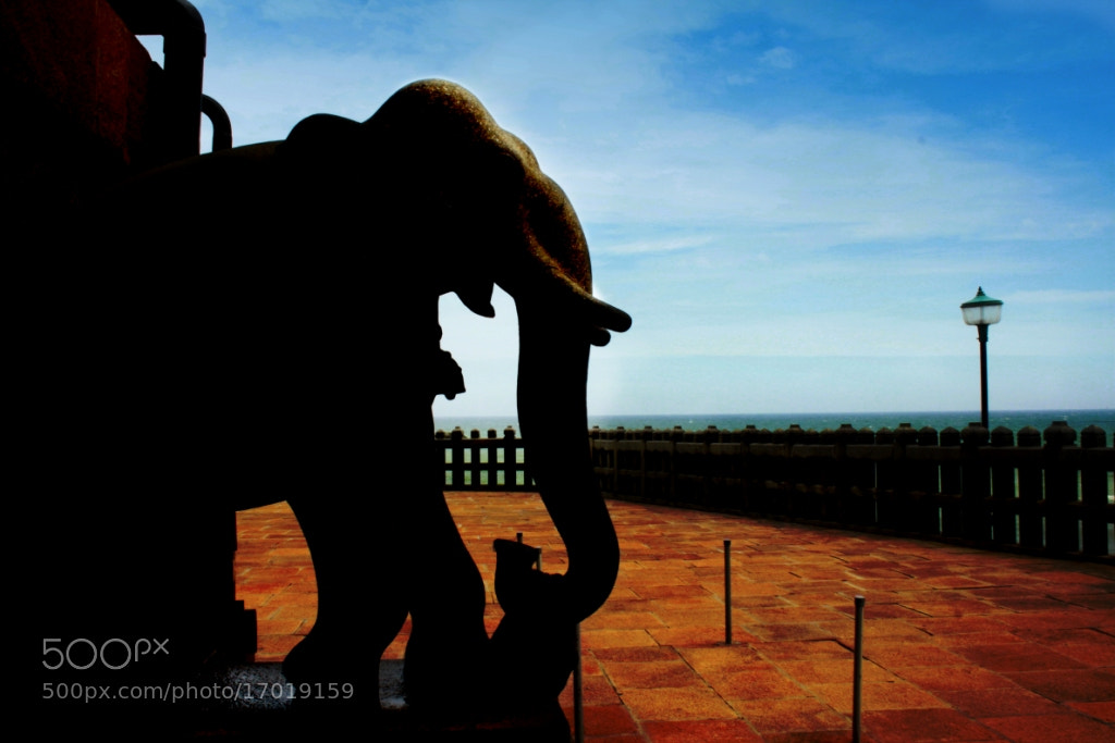 Photograph Stone Elephant by Ritesh Garatikar on 500px