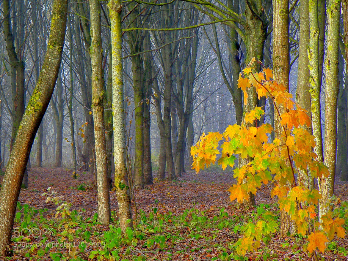 Photograph Foggy morning in Lithuania by **  REgiNA  **  on 500px