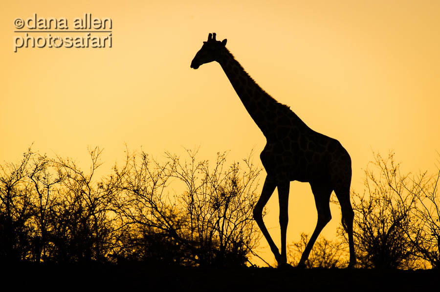 Photograph Simply Africa by Dana Allen on 500px