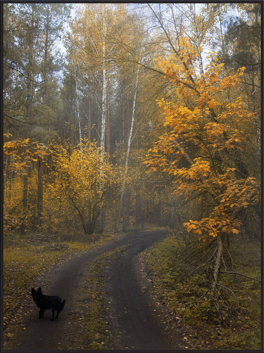 Photograph Walking dog by Helen Koshel on 500px