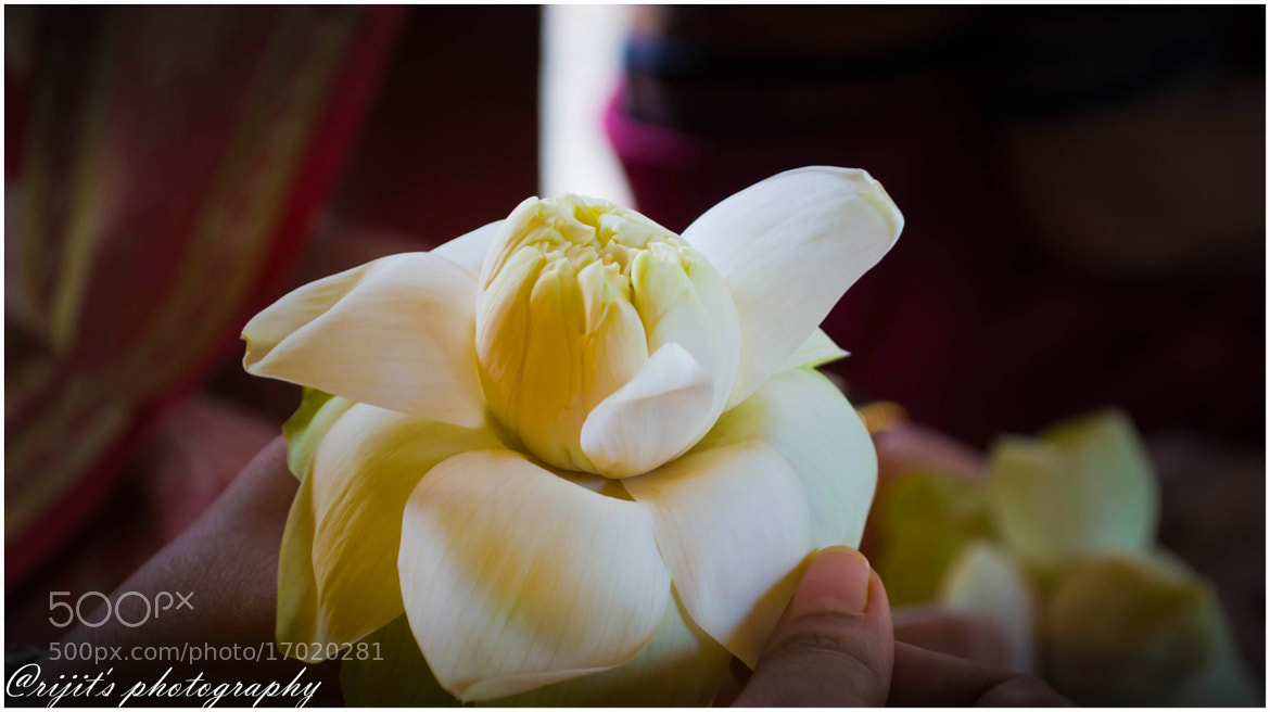 Photograph Blossom by Arijit Bose on 500px