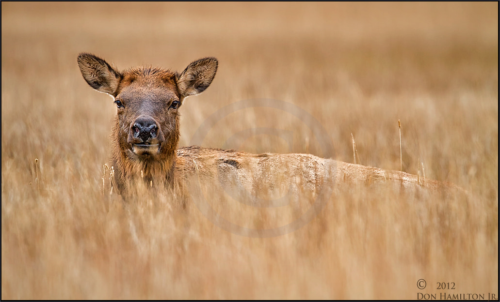 Photograph RMNP GAL by Don  Hamilton Jr. on 500px