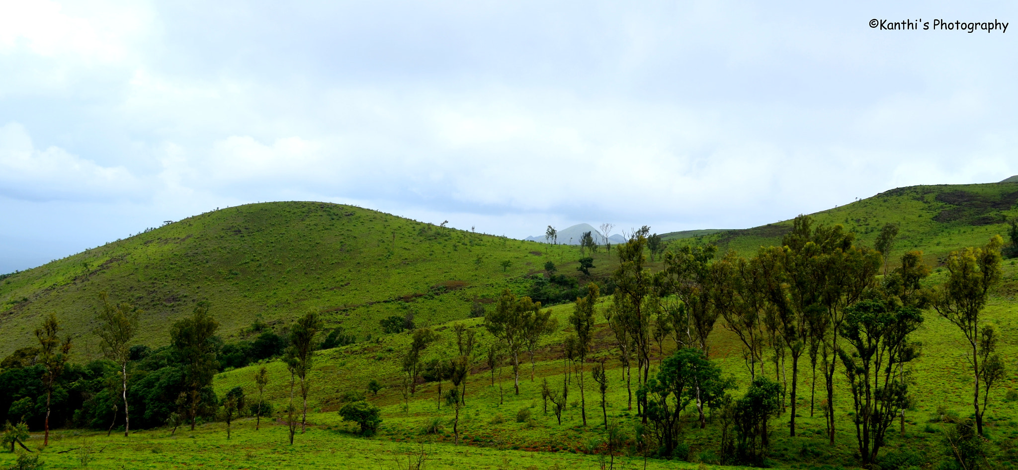 Photograph Green Everywhere by Kanthi Kiran on 500px