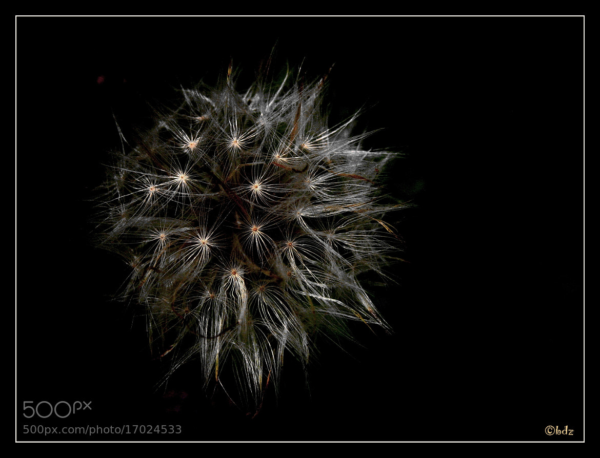 Photograph make a wish ... by Betty Ditscheid on 500px