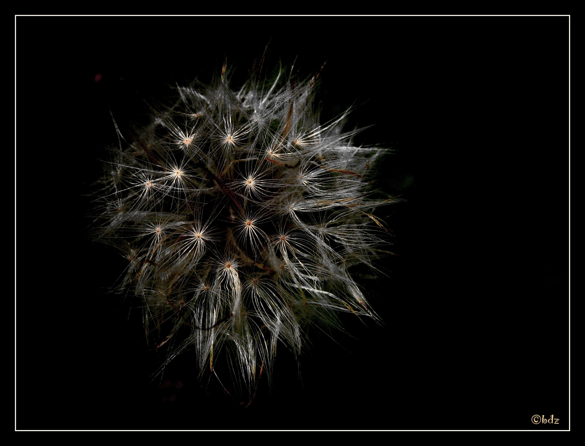 Photograph make a wish ... by Betty Ditscheid-Zweers on 500px