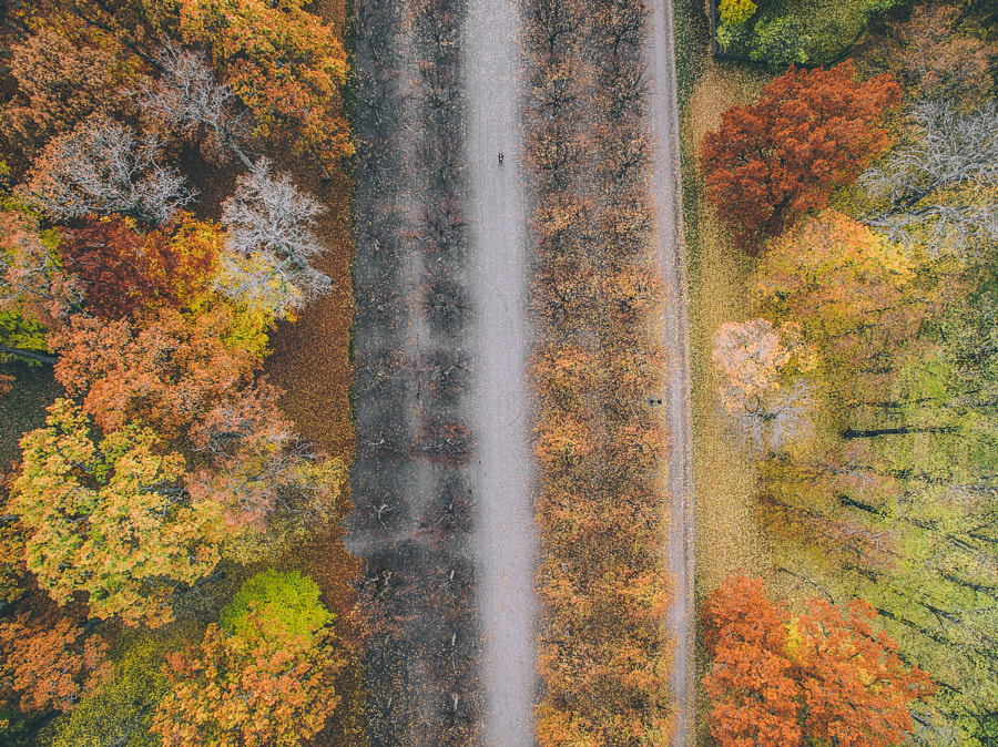 Waiting for Autumn by Tobias Hägg on 500px.com