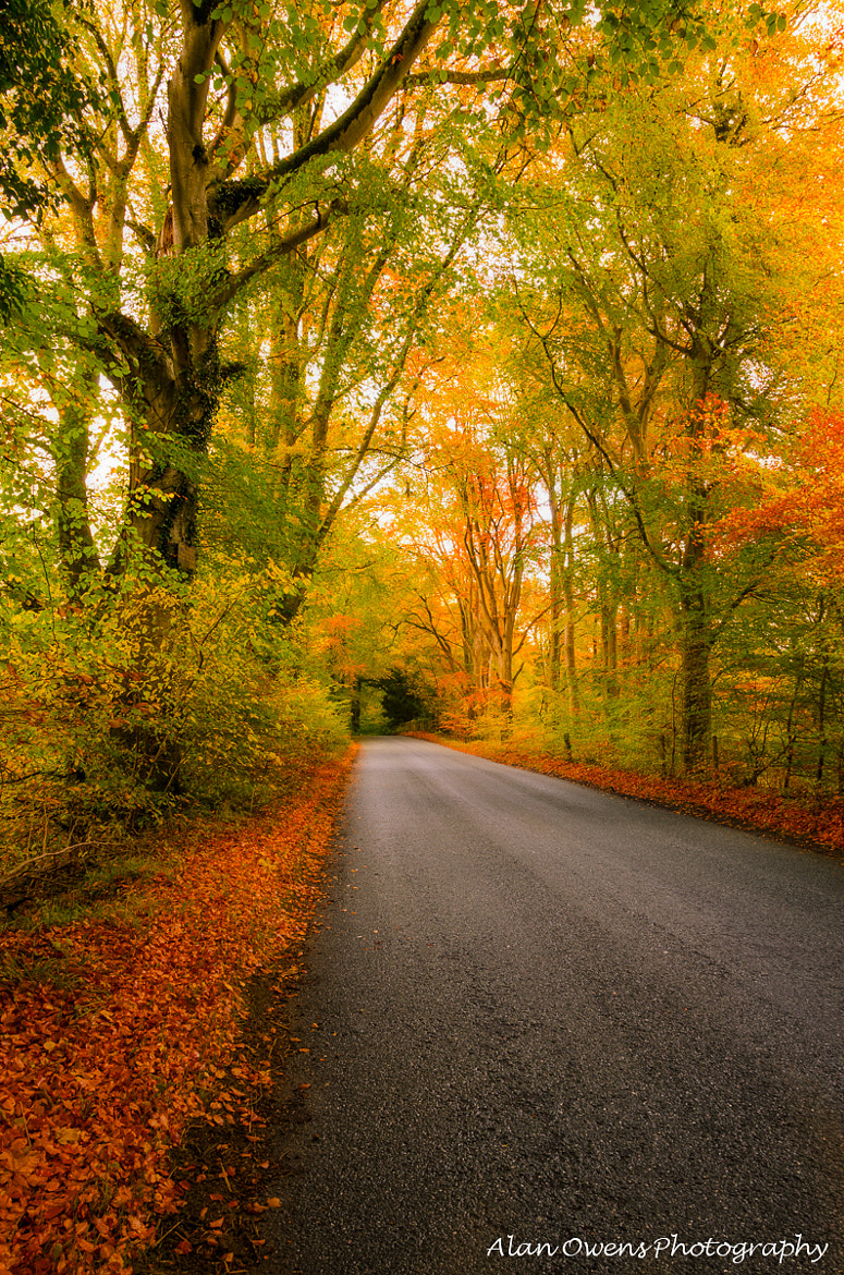 Photograph ~A Road of Dreams~ by Alan Owens on 500px