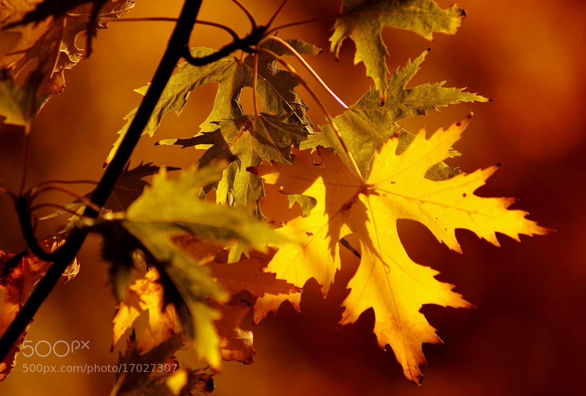 Photograph autumn has arrived by Tom Magnum on 500px