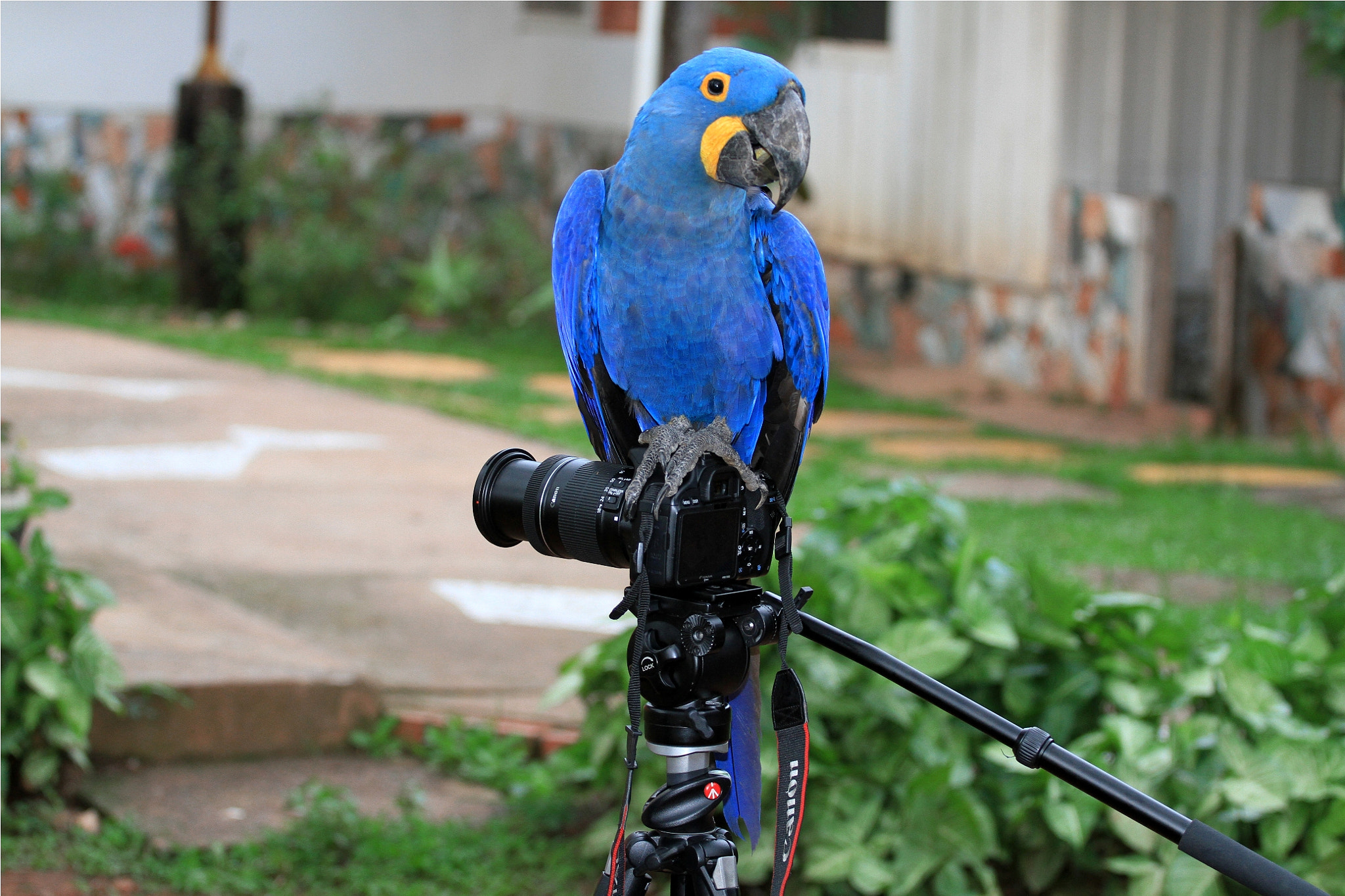 Photograph Portrait... by Itamar Campos on 500px