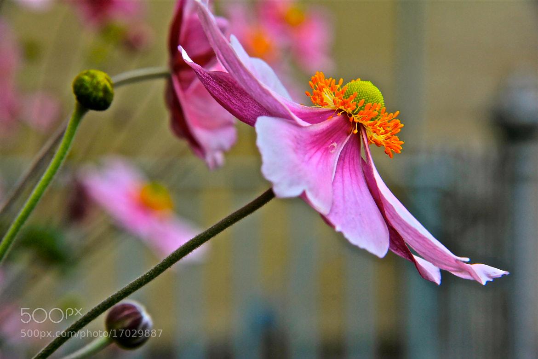 Photograph Cherish by Poh Huay Suen on 500px