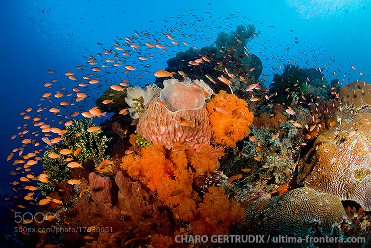 Photograph Reef by Charo Gertrudix on 500px