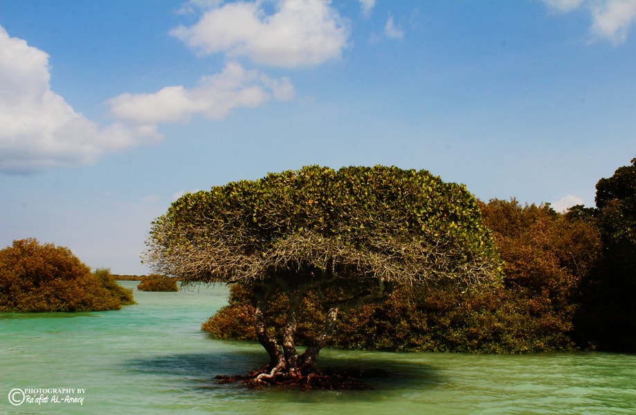 Photograph Mangrove trees by Ra'afat Al-Amery on 500px