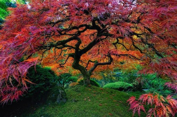 Photograph Tree of Color by Adam Holdman on 500px