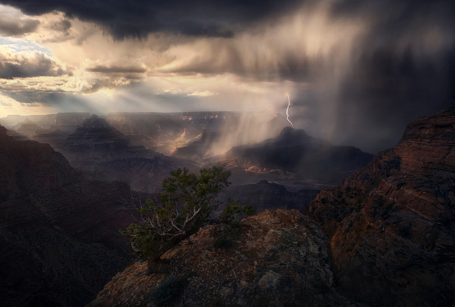 Fearless by Marc Adamus