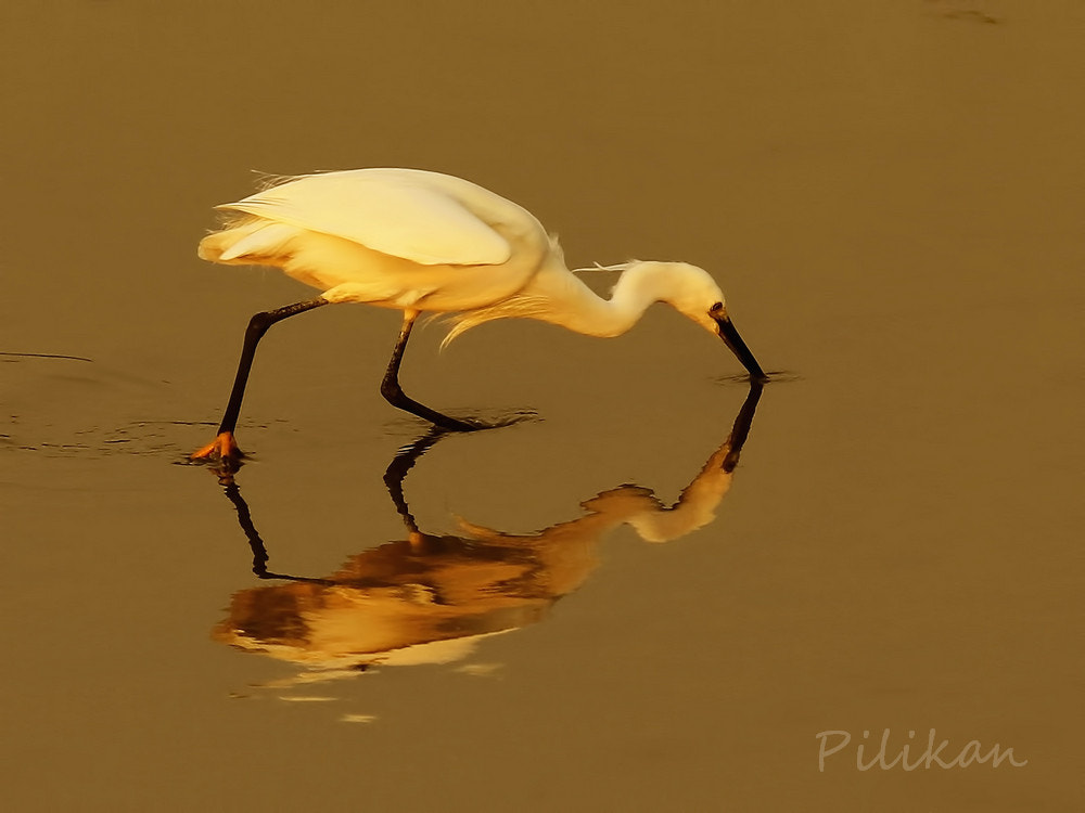 Photograph Gold by Pilikan Ch on 500px