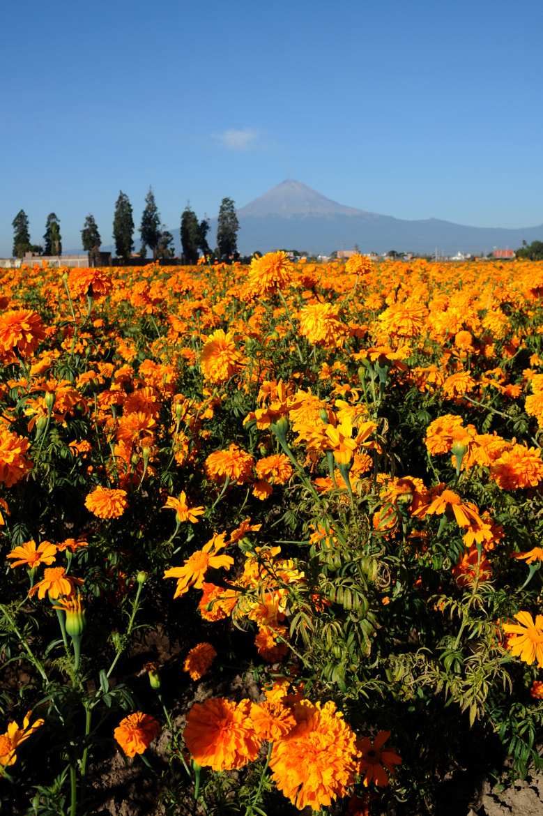 Photograph Flower and volcano by Cristobal Garciaferro Rubio on 500px