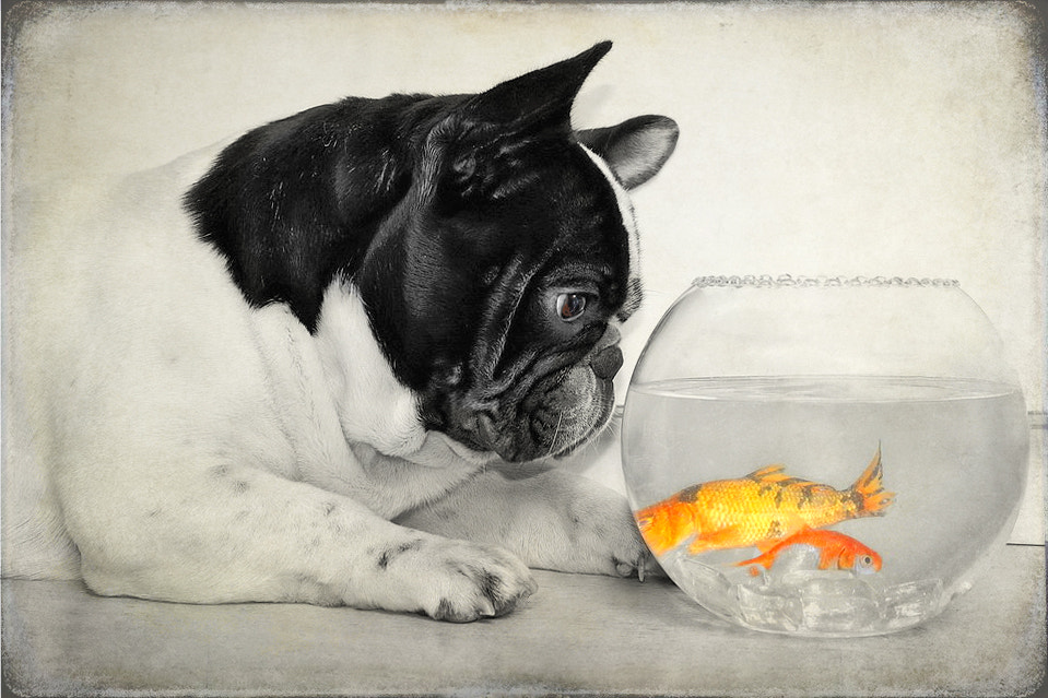 Photograph Thyson and the fish.... by Belén Argüeso Castelos on 500px