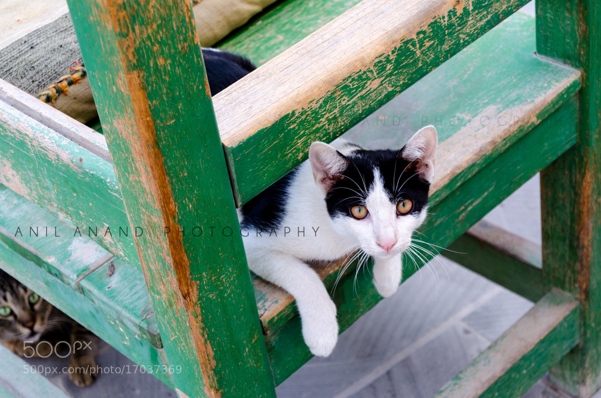 Photograph Curious cats by Anil Anand on 500px