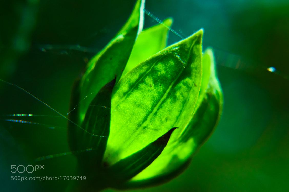 Photograph Nature Bulb by Girinath G on 500px