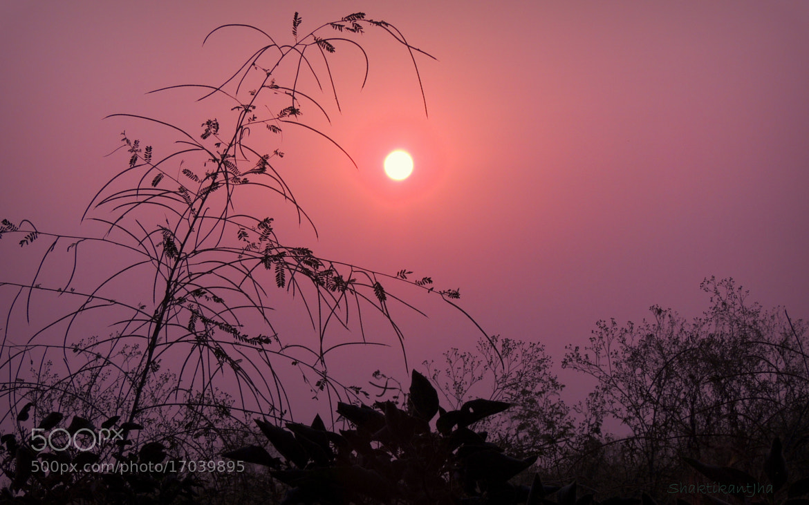Photograph Morning by Shaktikant Jha on 500px