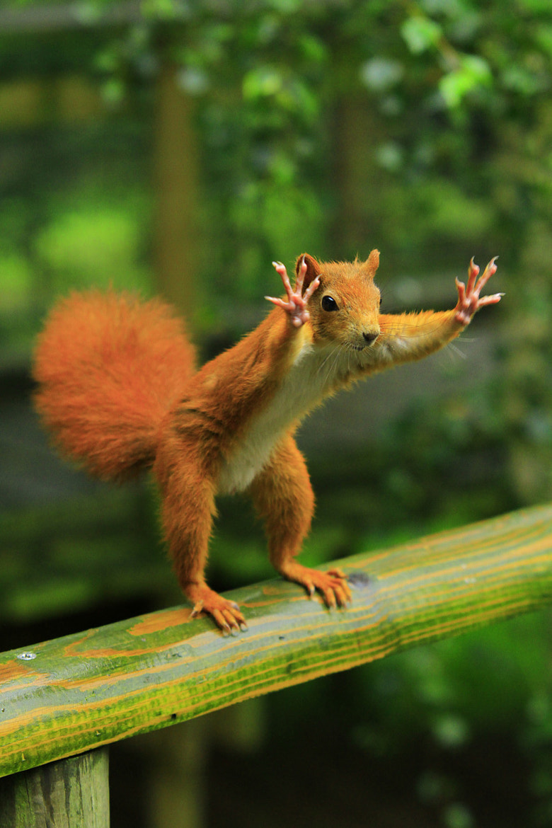 "Photograph ""I'd like this many hazelnuts please!"" by Ian Rentoul on 500px"