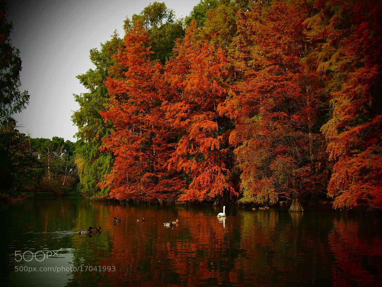 Photograph Autumn by Tony  Carriero on 500px