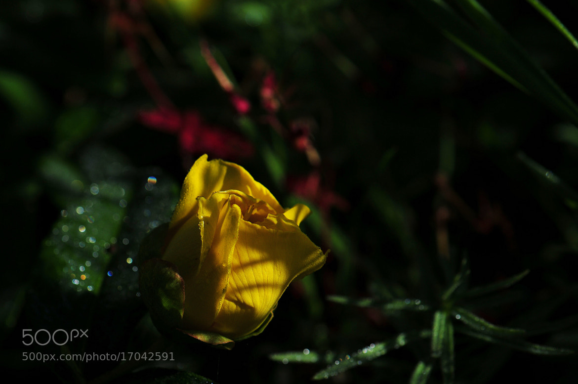 Photograph In yellow by Jelpa photographie on 500px