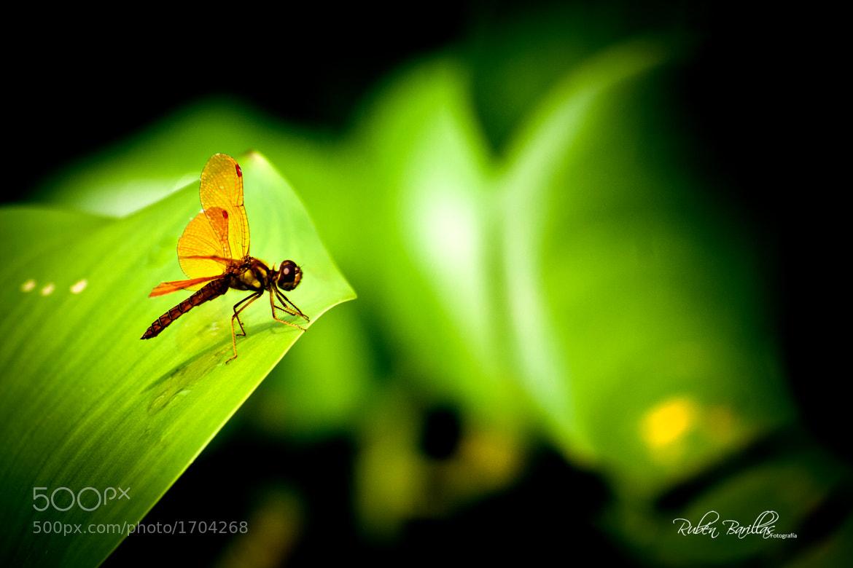 Photograph Listo para volar by Rubén Barillas on 500px