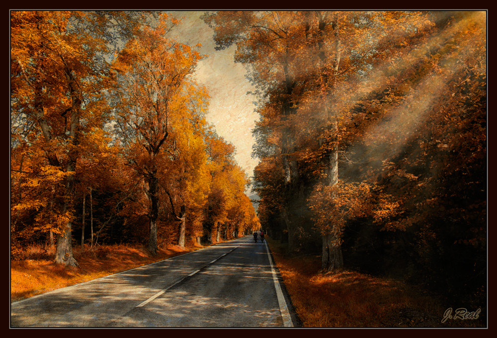 Photograph Carretera en el Bosque by Juan Real on 500px