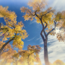 Autumn Dreams by Brenton Biggs (BrentonBiggs)) on 500px.com