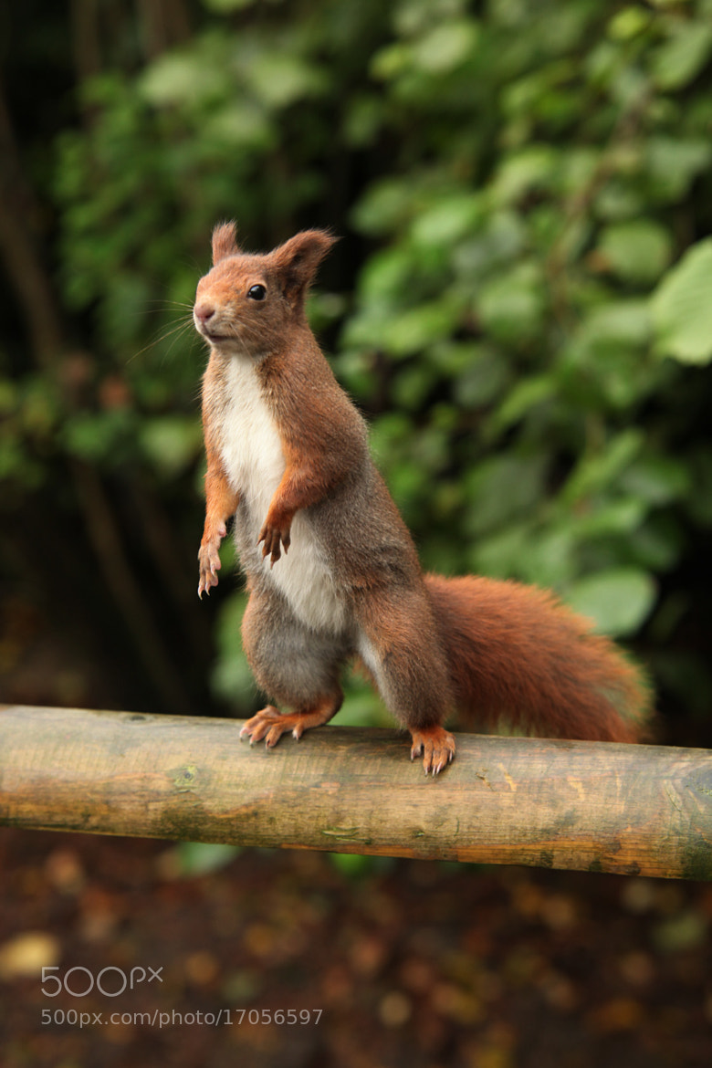 """Photograph """"Hazelnuts Would Be Most Generous!"""" by Ian Rentoul on 500px"""