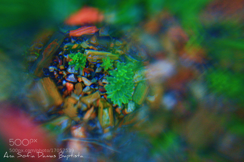 Photograph Mirage by Ana Sofia Baptista on 500px