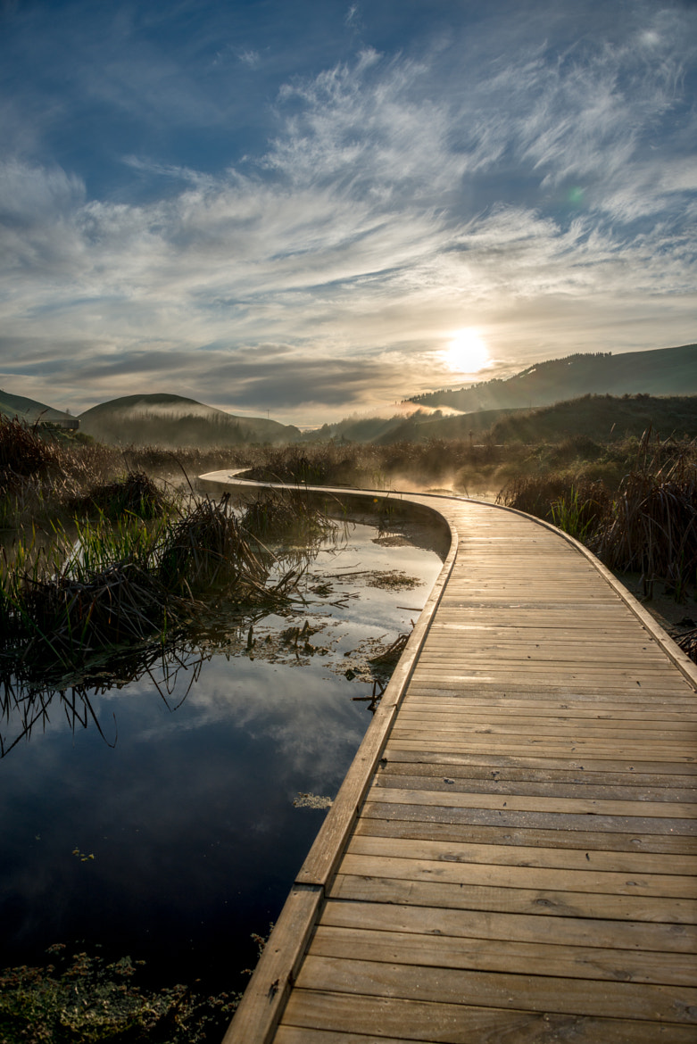 Photograph The Golden Path by Andrew Caldwell on 500px